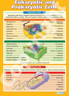 eukaryotic cell structure and function chart google on cell wall function id=35879