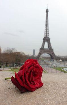 Una rosa en París (via Pinterest)