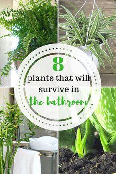 Plants, Plants for t