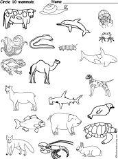 Images About Mammal Unit