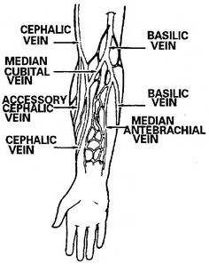 phlebotomy procedure - e phlebotomy training, Cephalic Vein