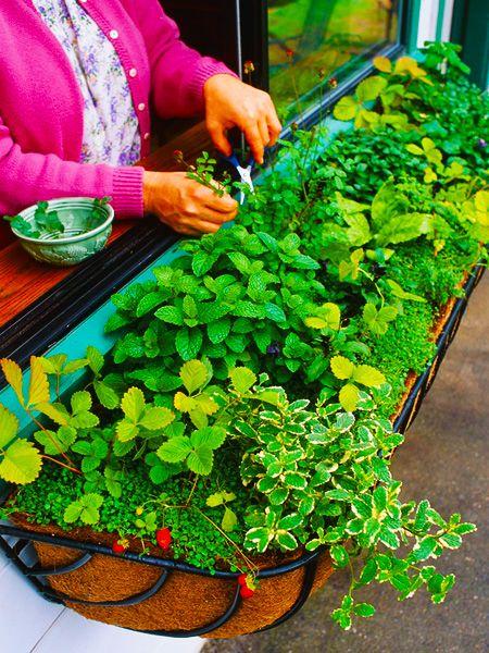 kitchen herb windowbox