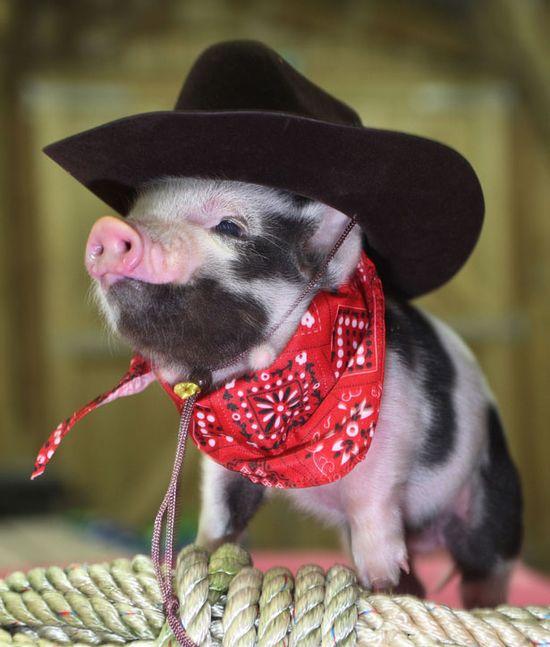 Micro Pigs!