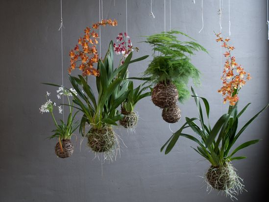 Orchid string garden