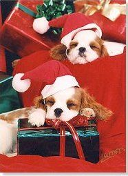 Christmas Cavalier King Charles Spaniel Beautiful