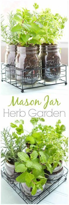 Mason Jar DIY Herb Garden | How To Grow Your Herbs Indoor - Gardening Tips and Ideas by Pioneer Settler at http://pioneersettler.com/indoor-herb-garden-ideas/: