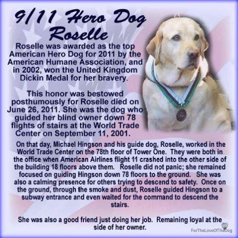 Roselle, 9/11 Dog, Hero, dogs of 9/11