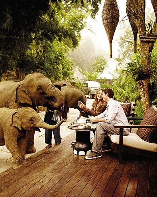 Four Seasons, Thailand. The elephants just roam around the property.  This is definitely on my Bucket List!!: