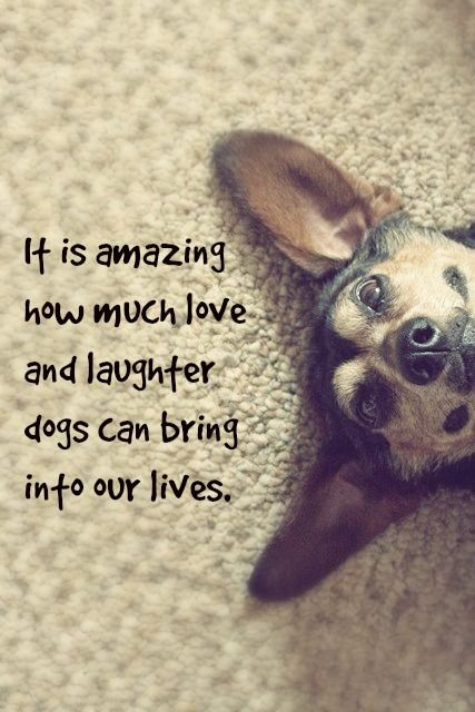 It is amazing how much love and laughter dogs can bring into our lives. #doglove #mansbestfriend: