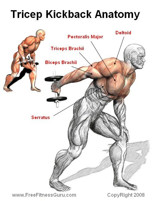 tricep kickback anatomy | Working Out | Pinterest ...