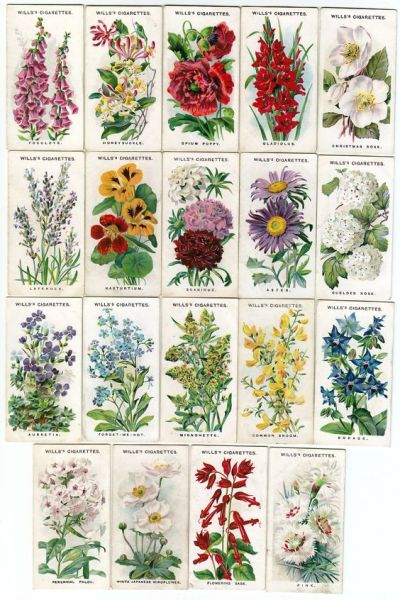 cottage garden plant list Names and illustrations of traditional English Cottage