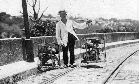 Vendedor de Galinhas - Ano de 1919: