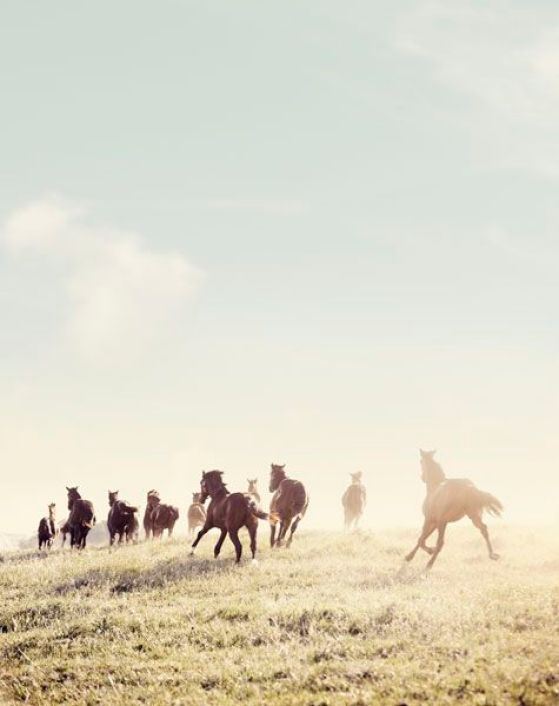 horses: