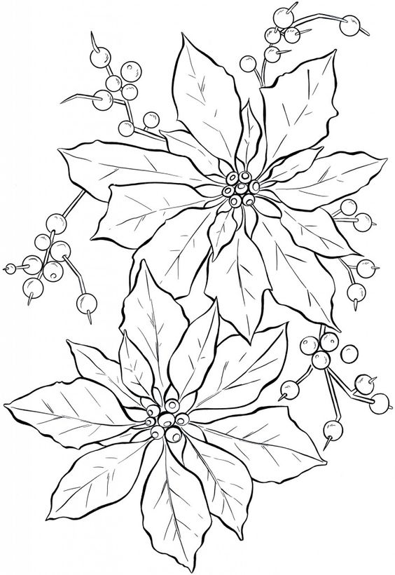 poinsettia line art and coloring on pinterest