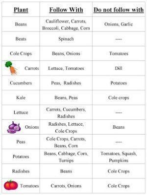 Vegetable Garden Crop Rotation Chart | GardenOutdoor