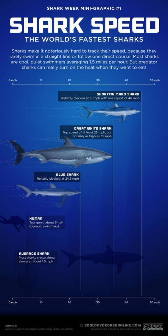 Shark Speed infographic