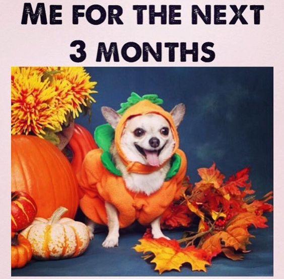 Pumpkin spice everything!!!!!: