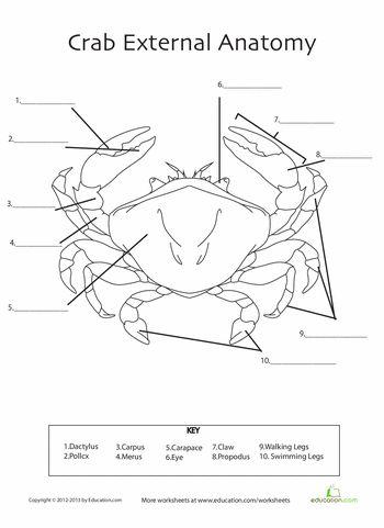 Crab Anatomy