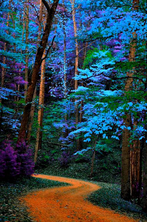 Blue trees path Great Smoky Mountains National Park, Tennessee: