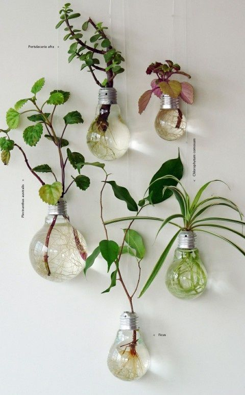 upcycled light bulb vases http://sulia.com/my_thoughts/84b2fd04-379f-4938-b5e7-233481225453/?source=pin&action=share&ux=mono&btn=big&form_factor=desktop&sharer_id=0&is_sharer_author=false: