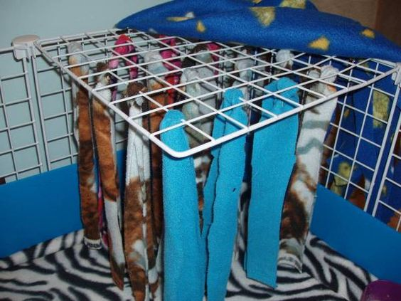 Guinea Pigs The Perfect Pet Life Creatively Organized
