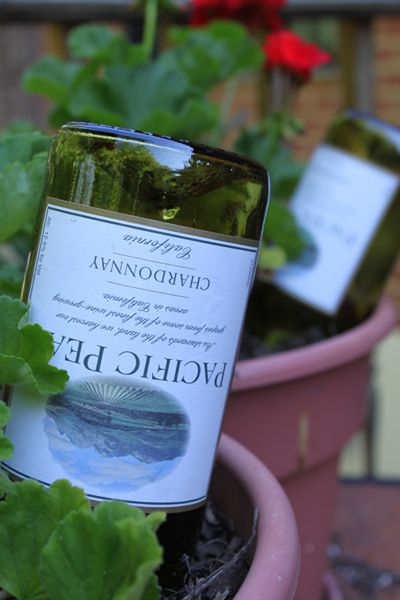 Just fill a wine bottle with water and quickly flip and insert into potted plant: instant self watering that lasts 2days to a week.: