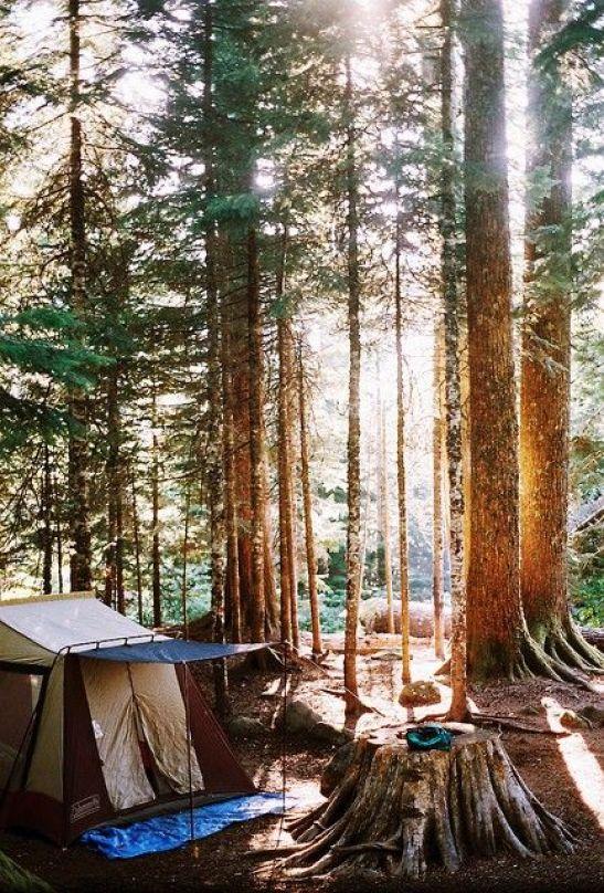 camp.:
