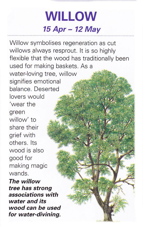 Celtic tree astrology willow apr 15 may 12 witches What is the meaning of tree