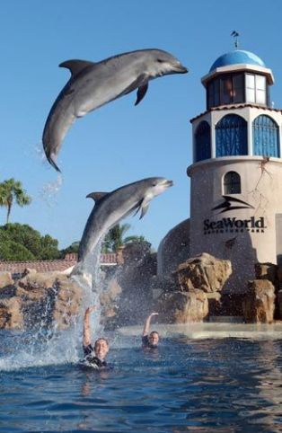 Going to Sea World is things to do around San Diego University!