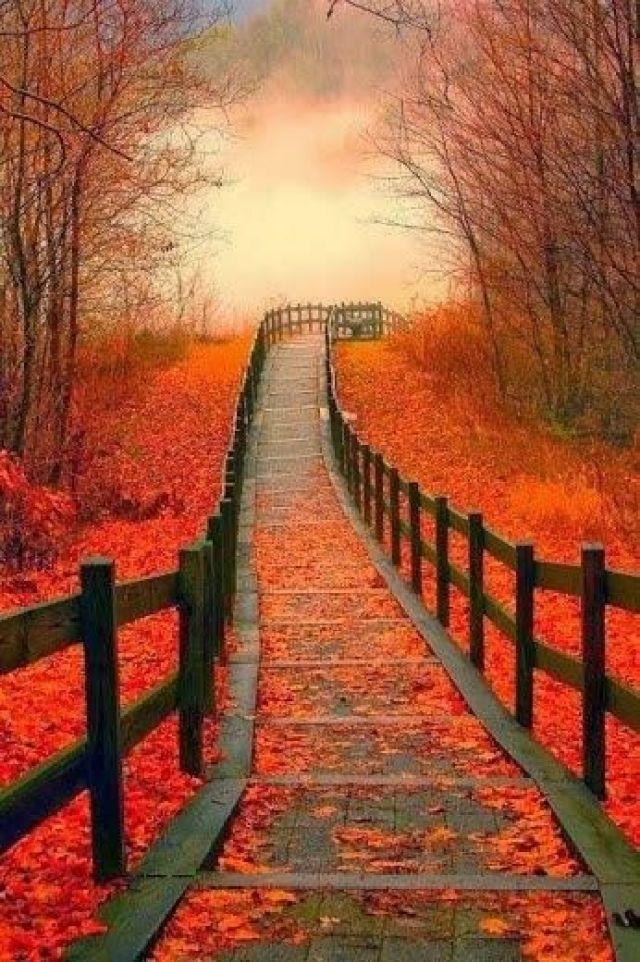Autumn walk...: