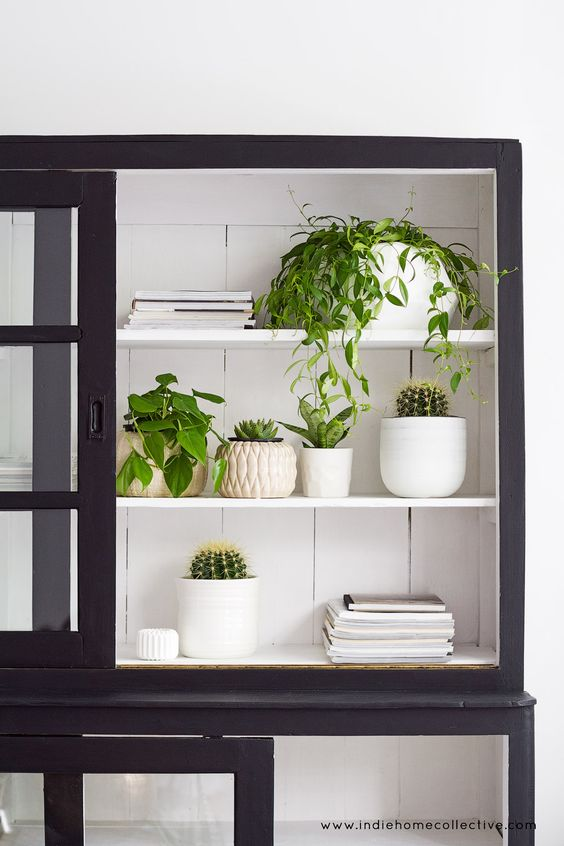 Fresh house plants in store - Styling/Photography: Indie Home Collective: