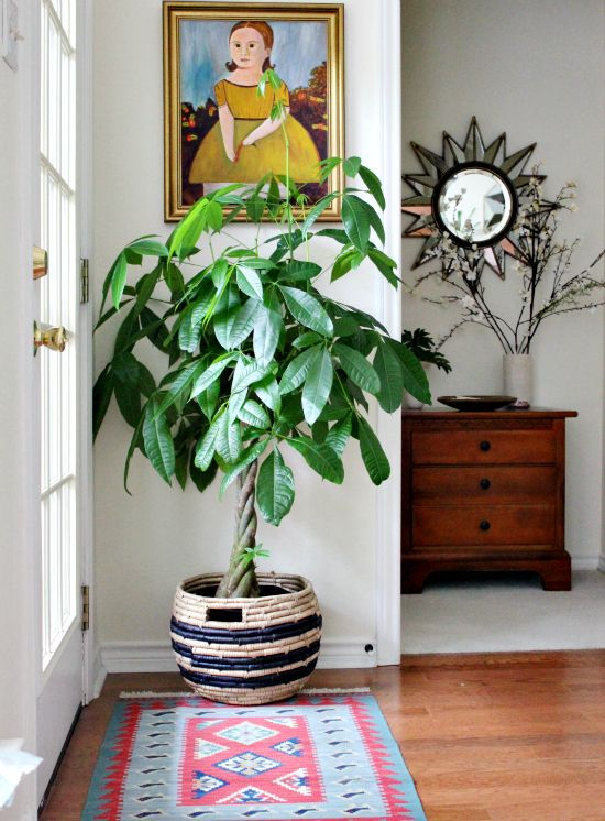 While you wait for warmer weather to get outside, take your green thumb inside with these seriously stylish indoor plants.:
