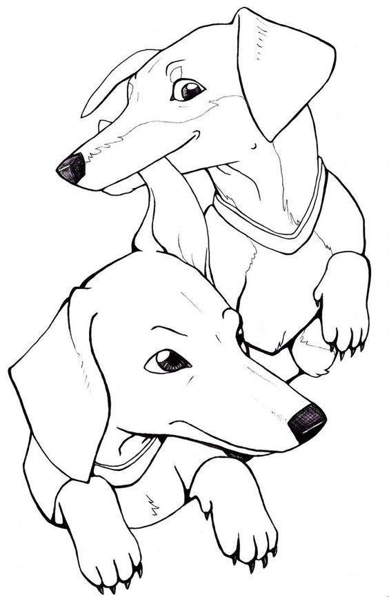 dachshund coloring page!!!!  aaron  pinterest  coloring