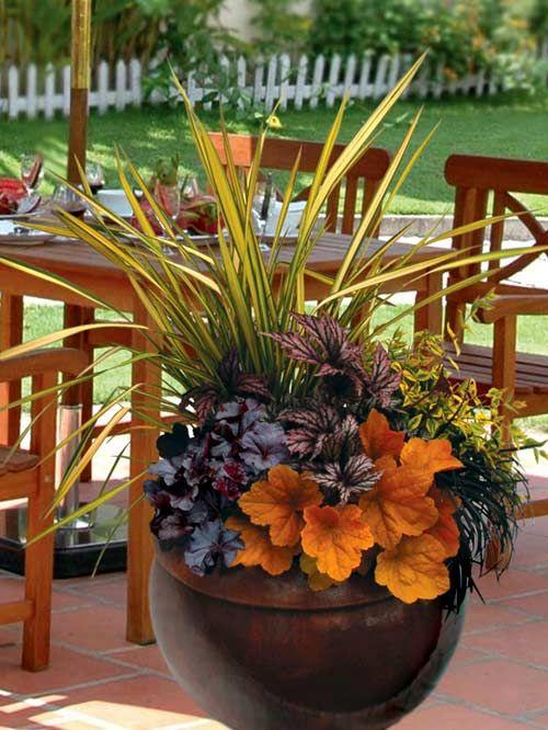 Terra Nova Nurseries - Professional Growers - Container Recipes: