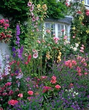 Front garden with Alcea and Rosa, Grafton Cottage, Staffordshire: