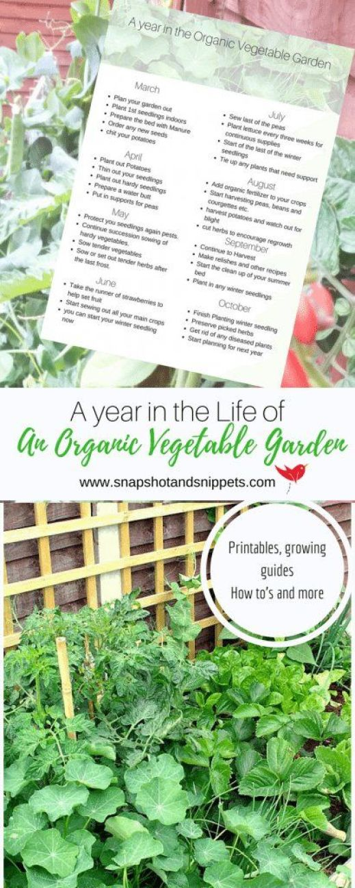A year in the life of an Organic Vegetable Garden https://snapshotandsnippets.com/2017/04/an-organic-vegetable-garden/ #veggiegarden #vegetables #raisedbeds #allotment #growyourownfood #homegrown #diy #lifestyle #greenliving #urbangarden:
