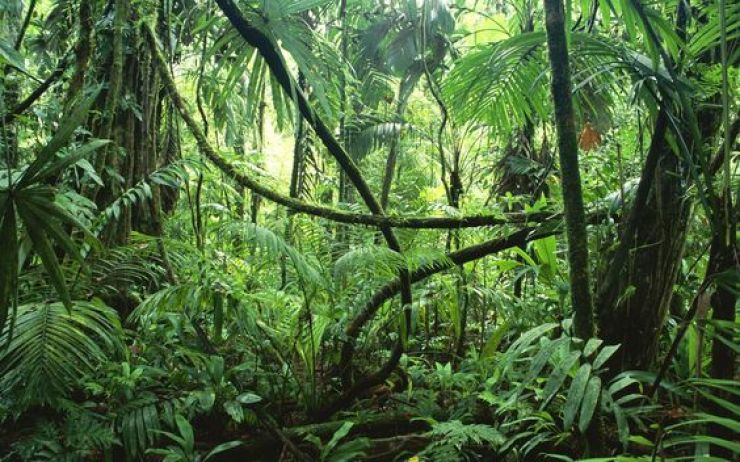 Image result for narrow path with rock wall in the rainforest, panama