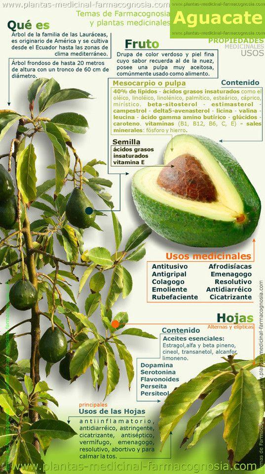 El aguacate tiene multitud de propiedades y usos medicinales. Es ideal como sustituto saludable de mahonesa y otras salsas en sándwiches y otro platos.: