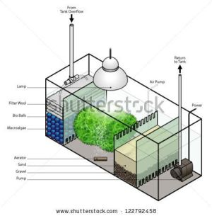 A refugium filter setup for an aquarium  stock vector | Устройство аквариума | Pinterest | All