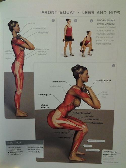 17 Best images about Muscles Gluteus News health Ants