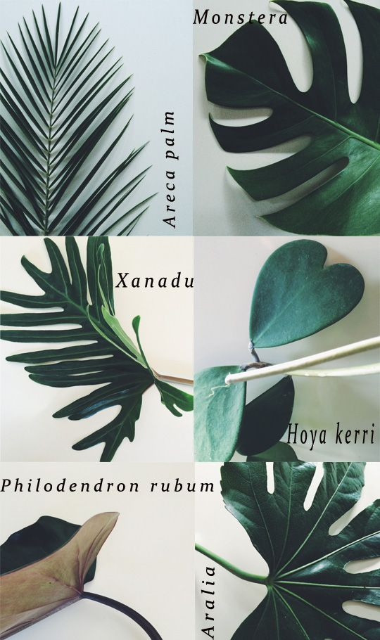 Bandit Kids art inspo || Botanical Inspiration || colour, texture, layer, design, collect, interior, foliage, plant, flowers, botanical, typography, graphic design, illustration, mixed media, print, magazine || @Bandit Kids #banditkids #art: