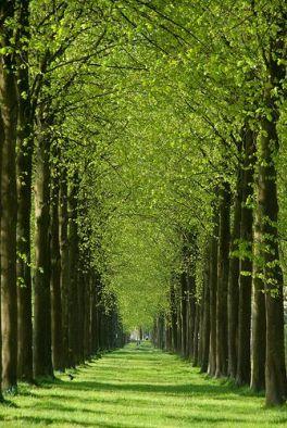 Pad naar Het Loo, Apeldoorn