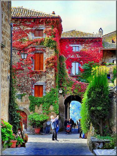 Vertical Garden  Serafini Amelia  Ingresso di Civita di Bagnoregio, Italy: