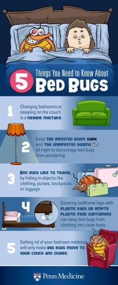 Getting Rid Of Bed Bugs Beautiful Home And Garden