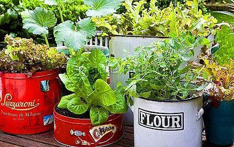 sebzeler otlar teneke bahçecilik