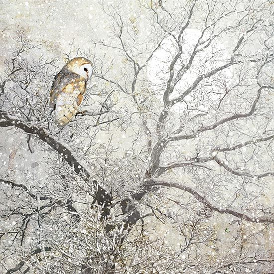 Barn Owl Christmas Card Design By Jane Crowther For Bug