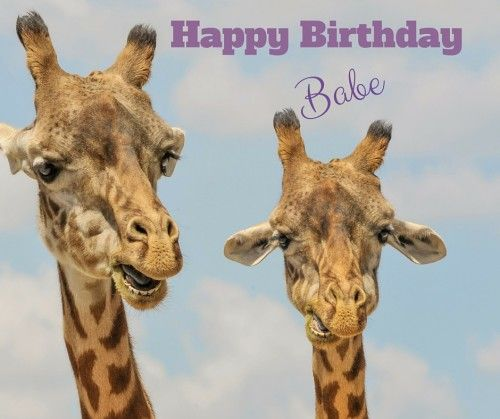 Birthday Messages Giraffes And Happy Birthday On Pinterest