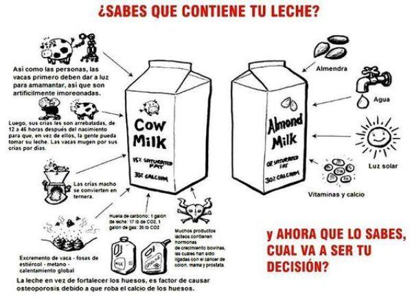 Otros motivos por los que elegir leches vegetales...