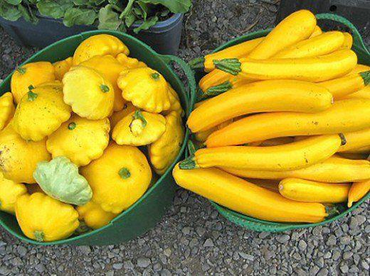 ef5d33c3d15ef8c3ff88c370c19bb530 7 Seeds for Your Summer Garden