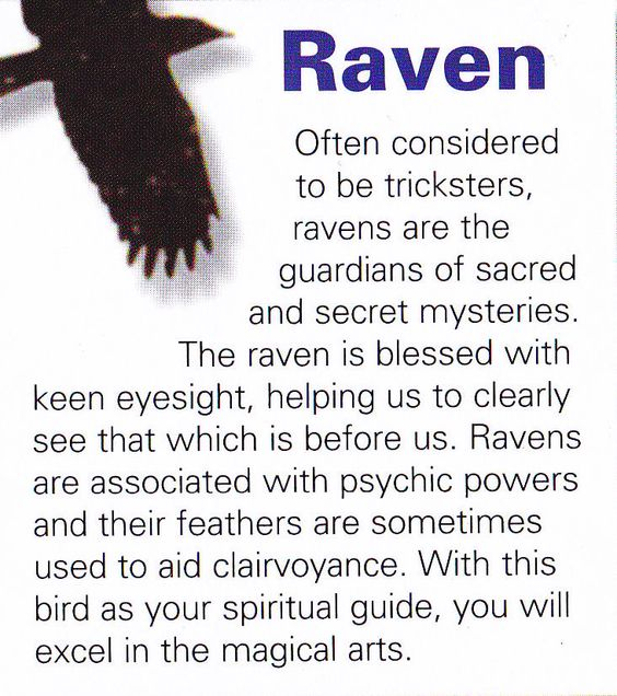Your Animal Spirit Guide For May 19th Is The Raven